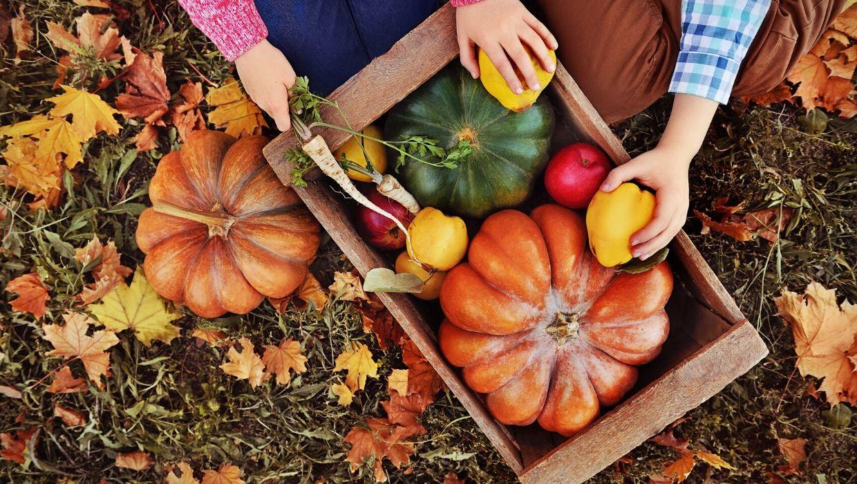 harvesting pumpkins and fall squash in a box